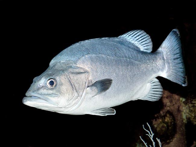 Vrakfisk